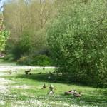 Projet traversée de canards